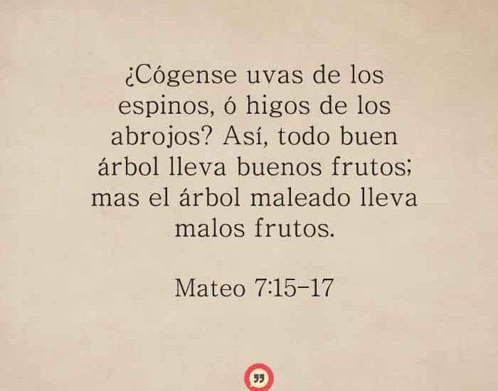 Mateo-7-15-17-dev