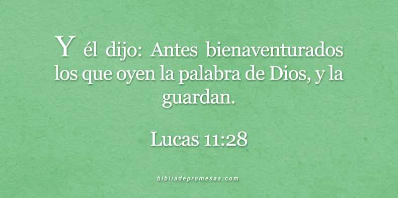 lucas-11-28-dev